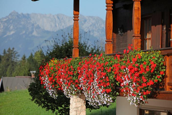 Ferienwohnungen Döllerer Reit im Winkl, Blütenrausch am Balkon
